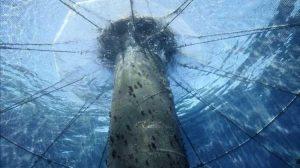 A las ventajas y aportaciones de la acuicultura en general, la ecológica permite un consumo responsable al apostar por una producción que reduce los impactos ambientales y rebaja la presión de las pesquerías, algunas de ellas sobreexplotadas.