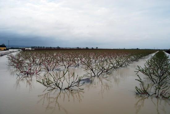 Una finca inundada en el municipio de Tocina