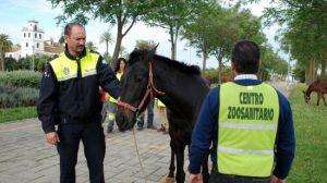 Zoosanitario atendiendo a un caballo