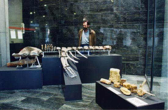 Los restos, de propiedad privada, serán ahora expuestos al público en el museo municipal