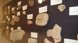 Algunas de las piezas cedidas tienen más de 250 millones de años