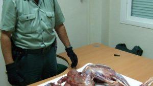 El cuerpo de la Guardia Civil se ha incautado de la carne del detenido