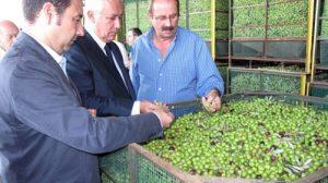 Javier Arenas y Ricardo Sánchez han visitado la Cooperativa y la Conservera para conocer su estado y funcionamiento/PPSevilla.