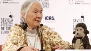 Jane Goodall durante la presentación en el Festival de Cine Europeo de Sevilla
