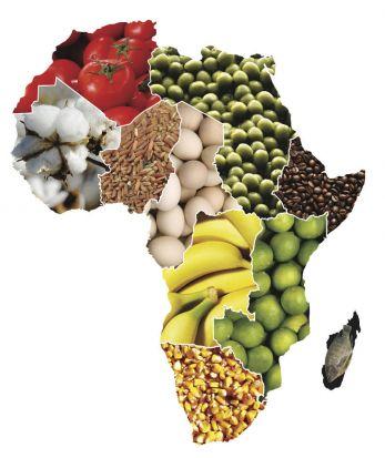 África podrá autoalimentarse en el plazo de una sola generación. /SA