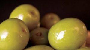 En el sector del olivar, los productores han sufrido pérdidas de más de 700 millones de euros, según COAG. /SA