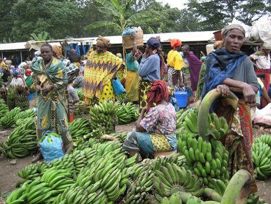 El ejemplo de Tanzania podría servirnos para ratificar la idea de que nada puede contra el mercado