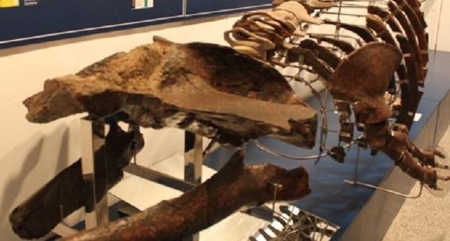 ballena-museo-alcala-170312