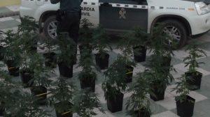Parte de la plantación intervenida por la Guardia Civil/SA