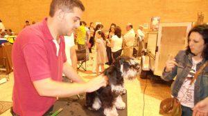 peluqueria-canina-fibes-030612