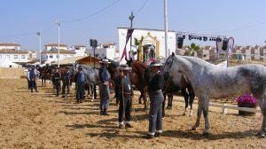 concurso-morfofuncional-caballos-gines