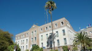 tratamiento-palmeras-palacios-170912