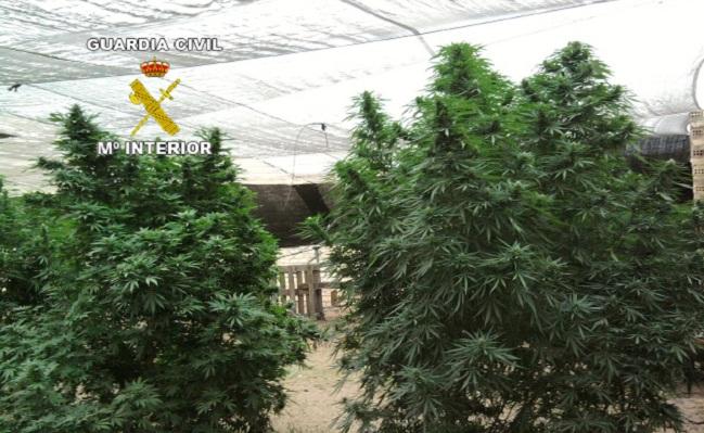 marihuana-paradas-guardia-civil-101012