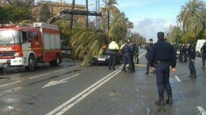 Una palmera ha caído en la Avenida de la Palmera, hiriendo a una niña. /Imagen de alottmo (@alottmo)