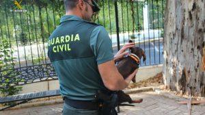 guardia-civil-mascota