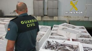 pescado-inmaduro-guardia-civil