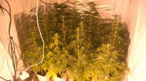 marihuana-trastero-sevilla