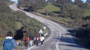 La vía pecuaria que el Ayuntamiento ha acordado modificar con dos terratenientes permanece hoy ocupada, obligando a los peregrinos del Camino de Santiago a transitar en el arcén de la carretera / Sevilla Actualidad