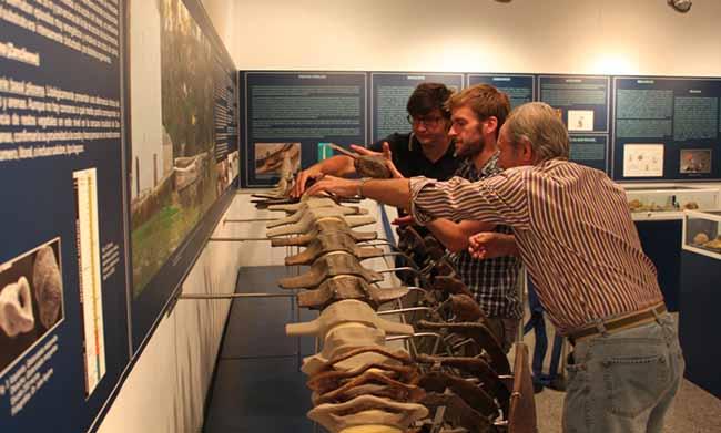 visita-ballenologo-museo-alcala