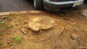 tala-arbol-aparcamiento