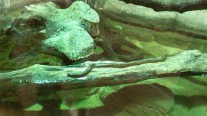 anacondas recien naccidas