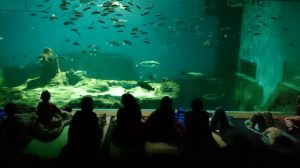 Acuario de Sevilla noche con tiburones