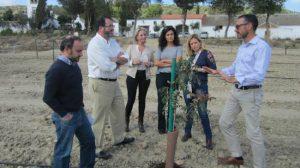 Cultivo-pistacho-Carmona
