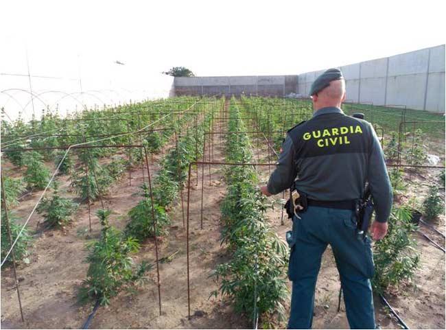 plantacion-marihuana-utrera