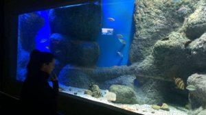 tanque-rocoso-acuario