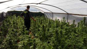 invernadero-marihuana-los-palacios
