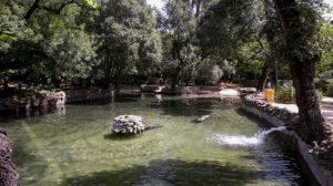 estanque-parque-maria-luisa-patos-2