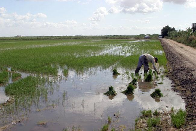 ruta-arroz-marismas