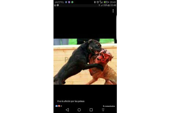 movil-peleas-de-perro