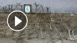 cuerno-ciervos-navas-de-la-concepcion