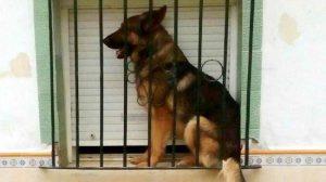 perro-atrapado