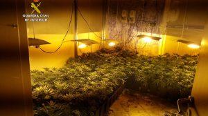 plantas-laboratorio-droga-gcivil