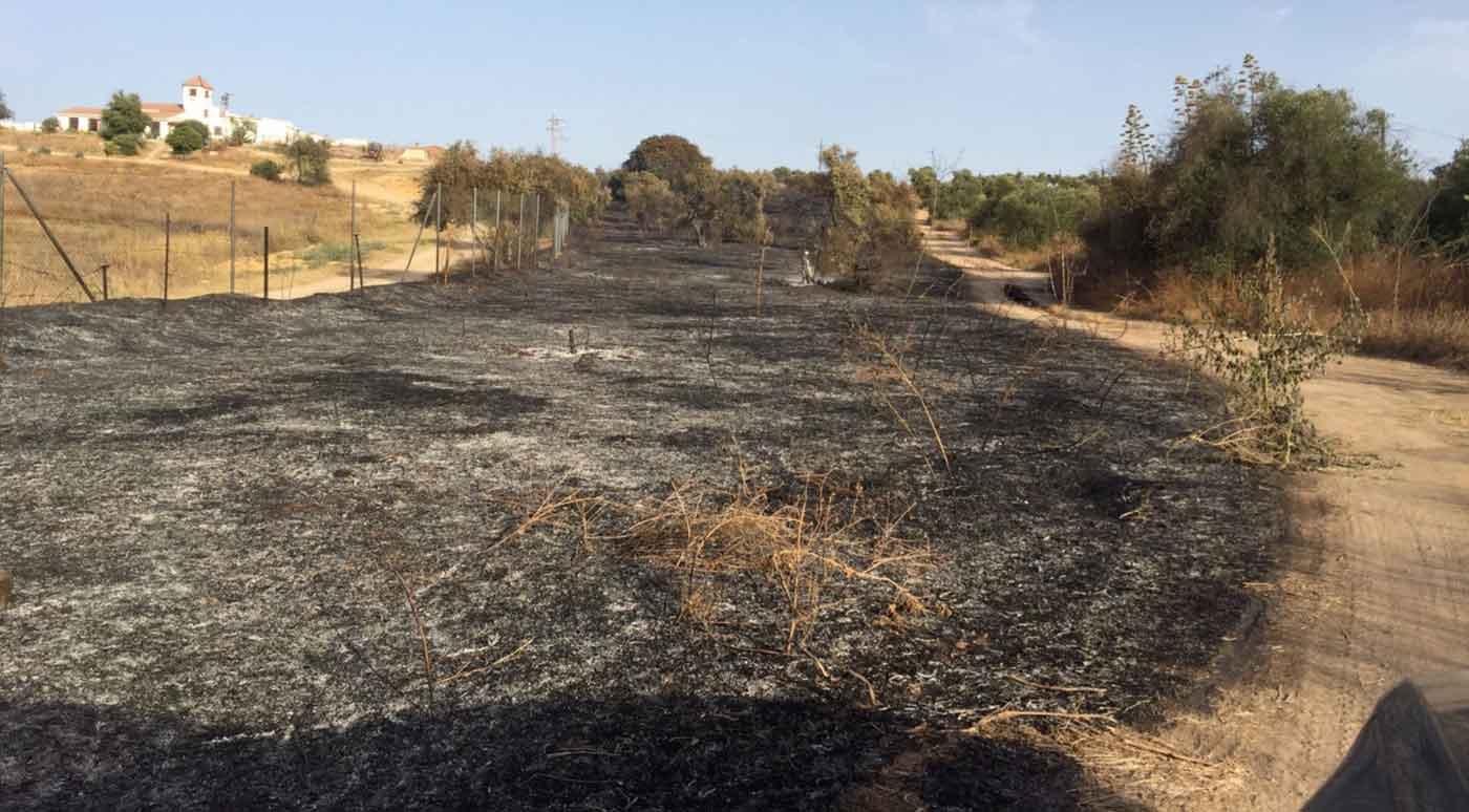 incendio-alcala-2017-web