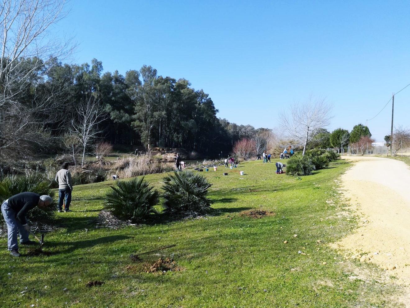 Plantación de árboles en Alcalá