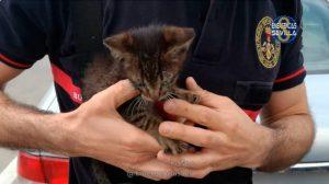 El gatito rescatado /@EmergenciasSev