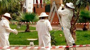 Operarios del Zoosanitario actúan contra las abejas /Ayto. Sevilla