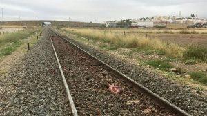 Vía con restos de animales muertos /SA