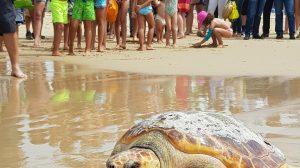 Suelta de la tortuga Caretta caretta en la costa de Tarifa /Acuario de Sevilla