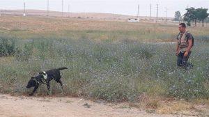 Investigación envenenamiento perros /Ayto. Utrera