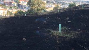 Nuevo incendio en el Carambolo /@Sevilla Más Verde